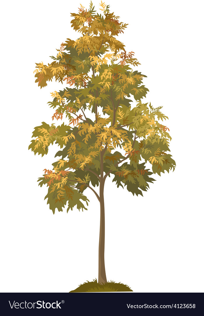 Acacia autumnal tree and grass vector | Price: 1 Credit (USD $1)