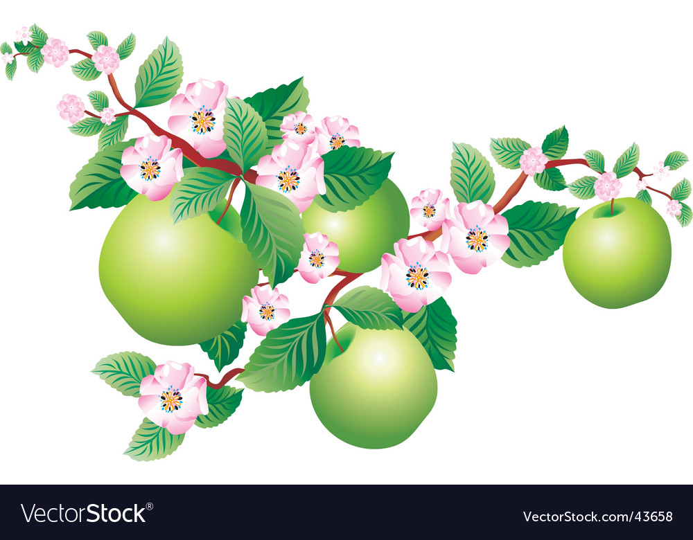 Apple blossom vector | Price: 3 Credit (USD $3)