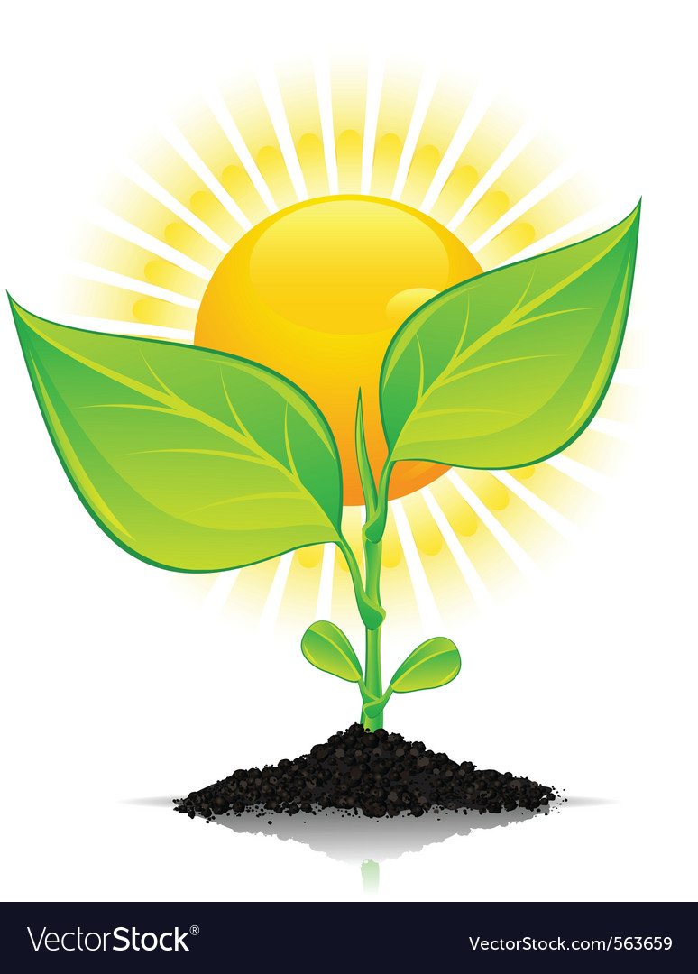 New plant growth vector | Price: 1 Credit (USD $1)