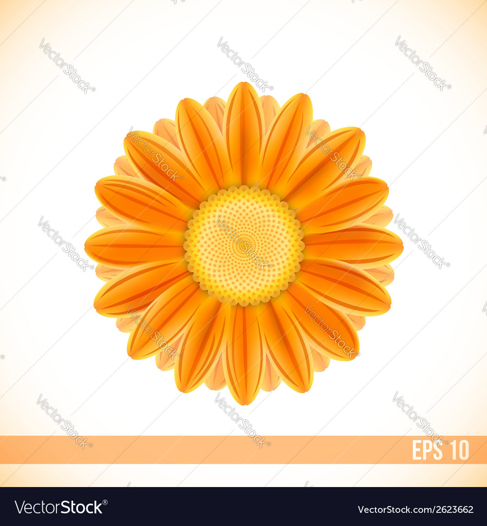 Orange gerbera flower vector | Price: 1 Credit (USD $1)