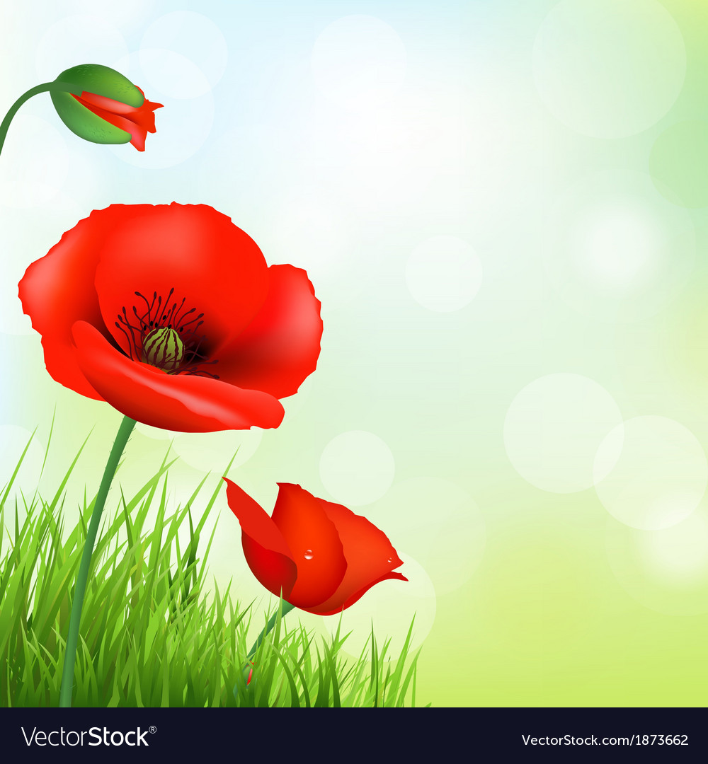 Red poppy and green grass vector | Price: 1 Credit (USD $1)