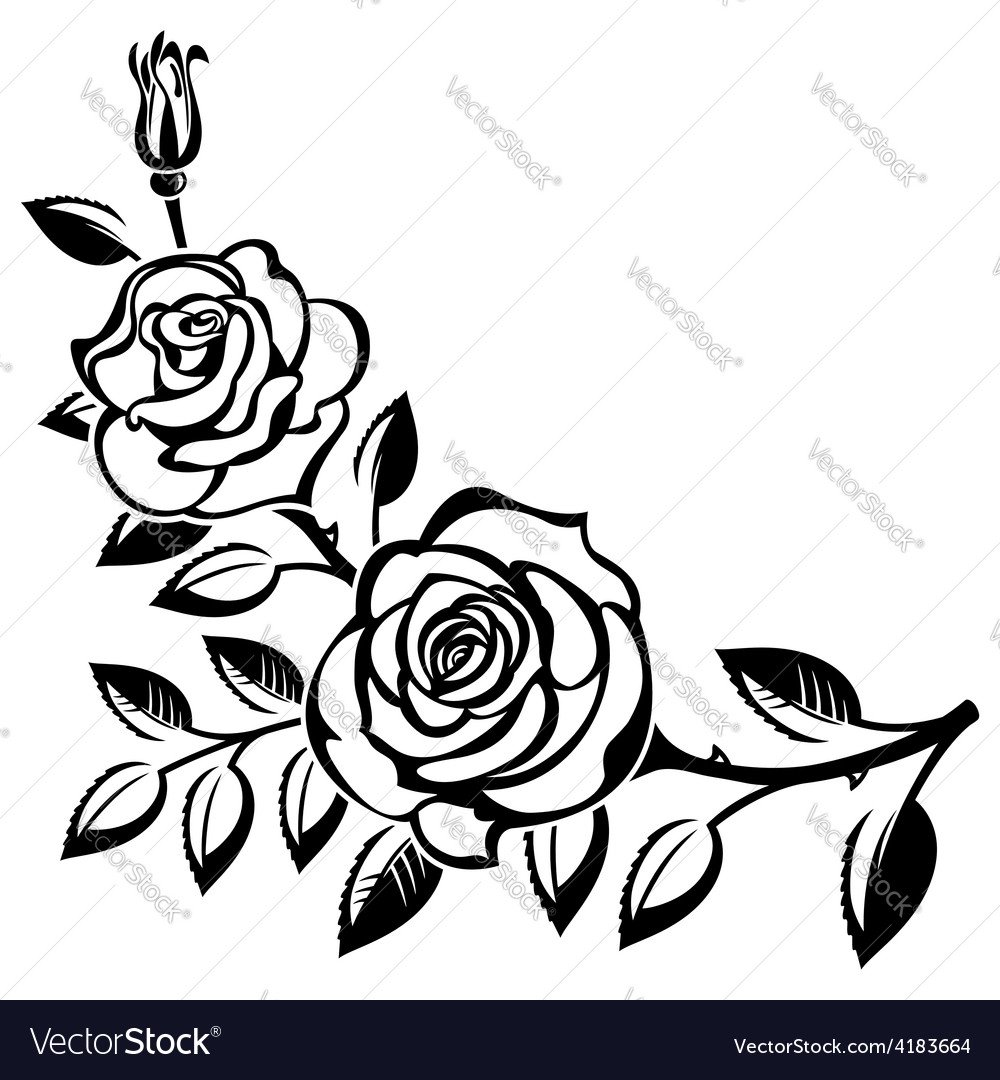 Branch of roses vector | Price: 1 Credit (USD $1)