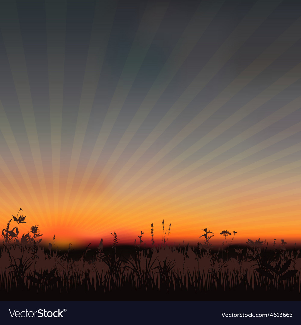 Sunset meadow vector   Price: 1 Credit (USD $1)