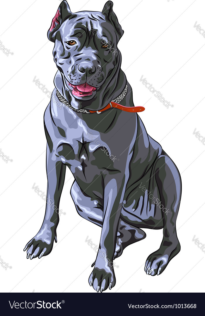 Black cane corso smiling italian breed of dog vector | Price: 3 Credit (USD $3)