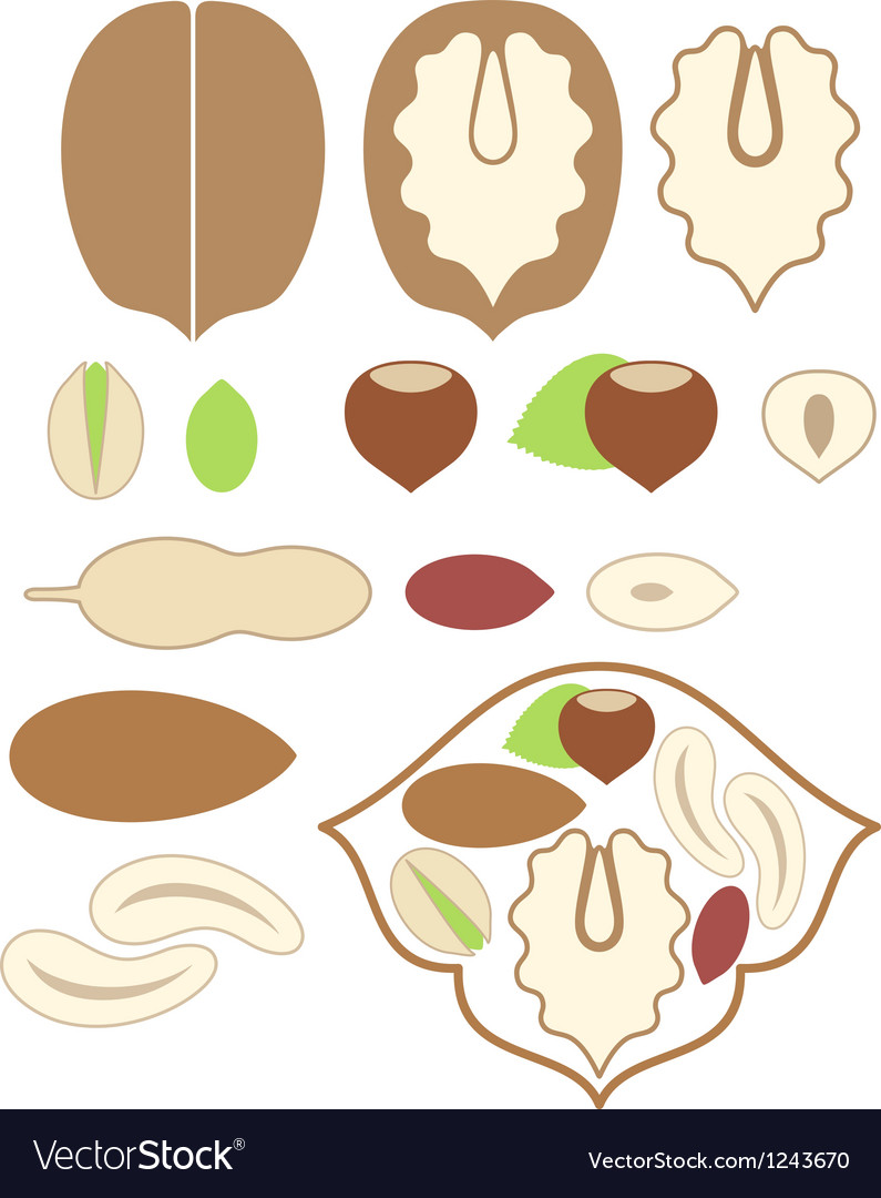 Nuts walnut almond peanut pistachio hazelnut vector | Price: 1 Credit (USD $1)