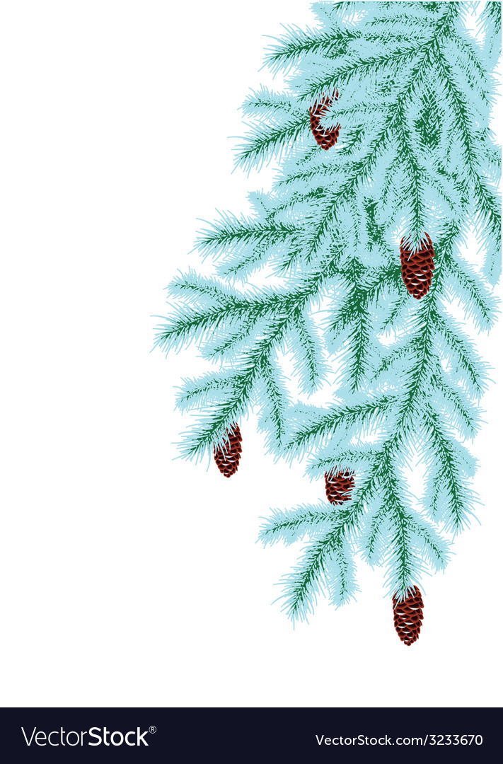 Winter fir vector | Price: 1 Credit (USD $1)