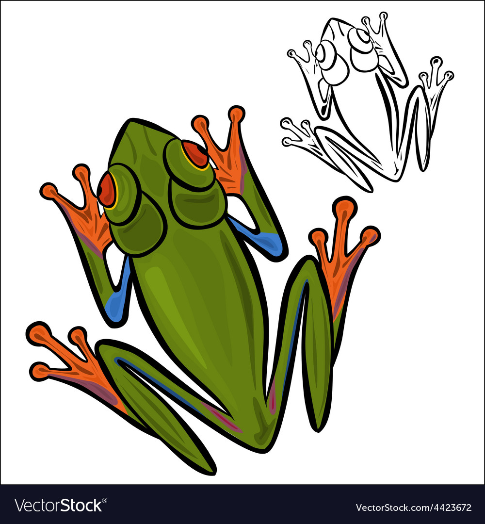 Red eyed tree frog vector | Price: 1 Credit (USD $1)
