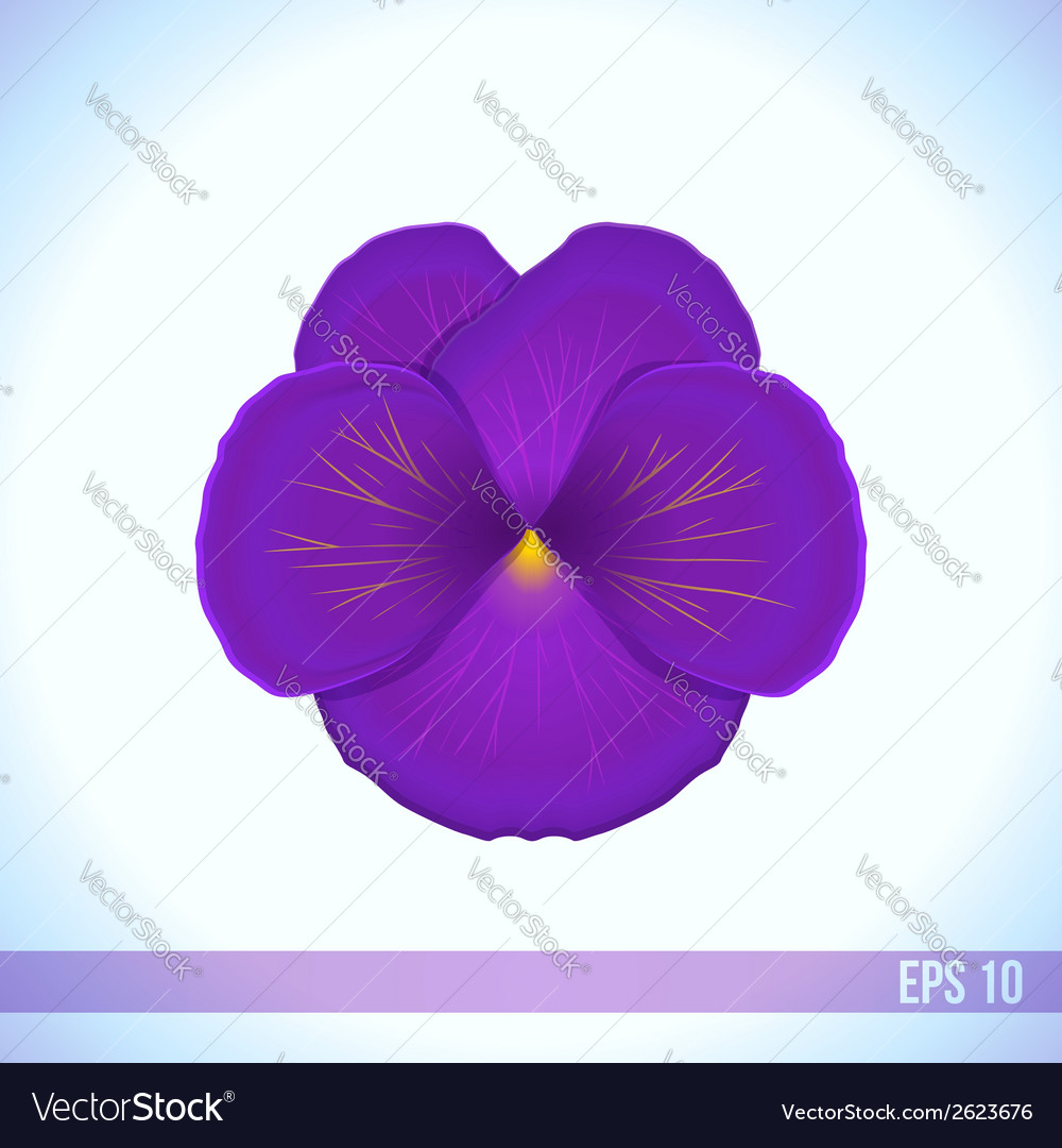 Head of violet viola flower vector | Price: 1 Credit (USD $1)