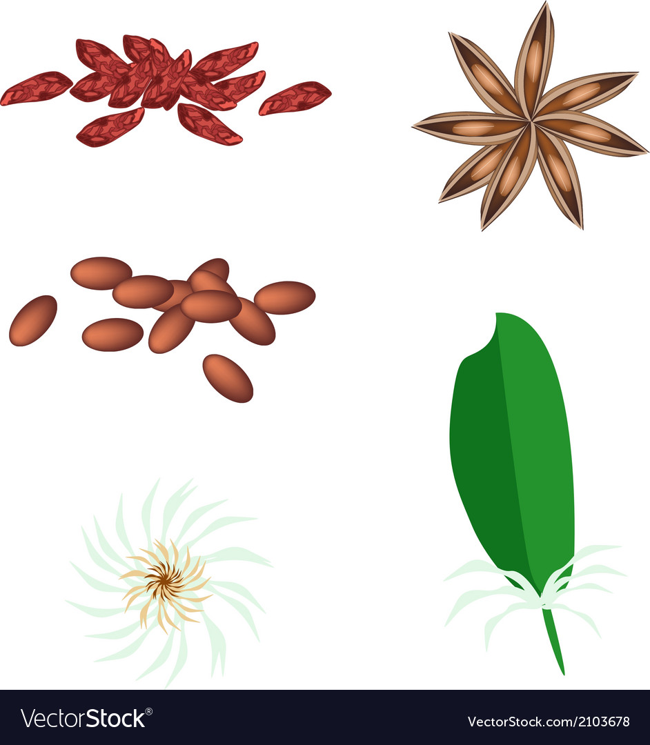 A set of star anise on white background vector | Price: 1 Credit (USD $1)