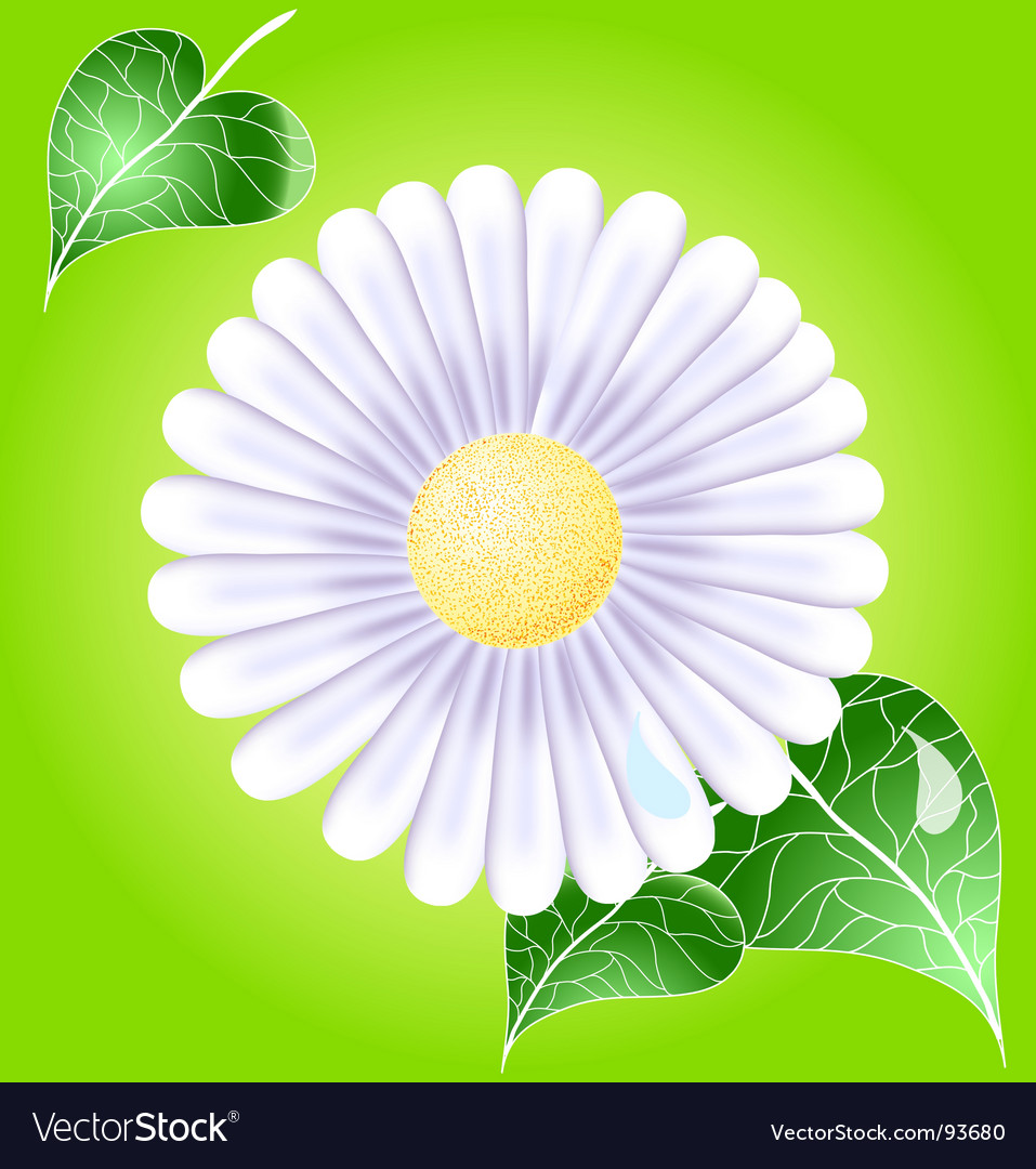 White daisy vector | Price: 1 Credit (USD $1)