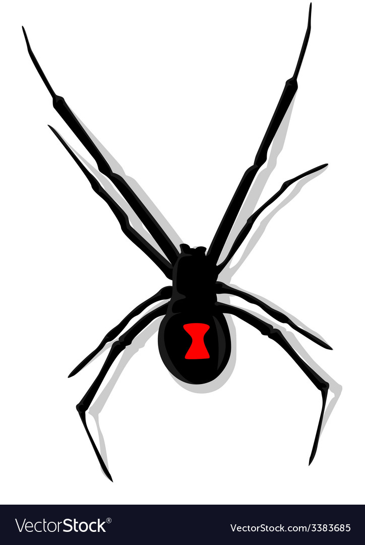 Black widow spider vector | Price: 1 Credit (USD $1)