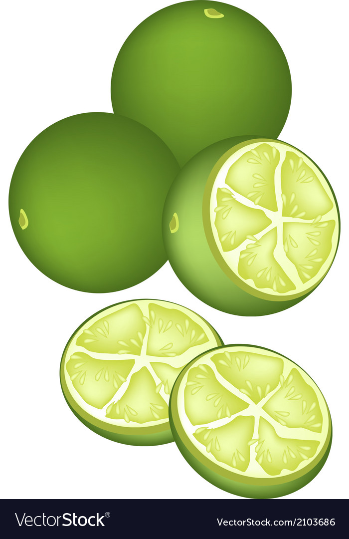 Fresh limes and half on white background vector | Price: 1 Credit (USD $1)
