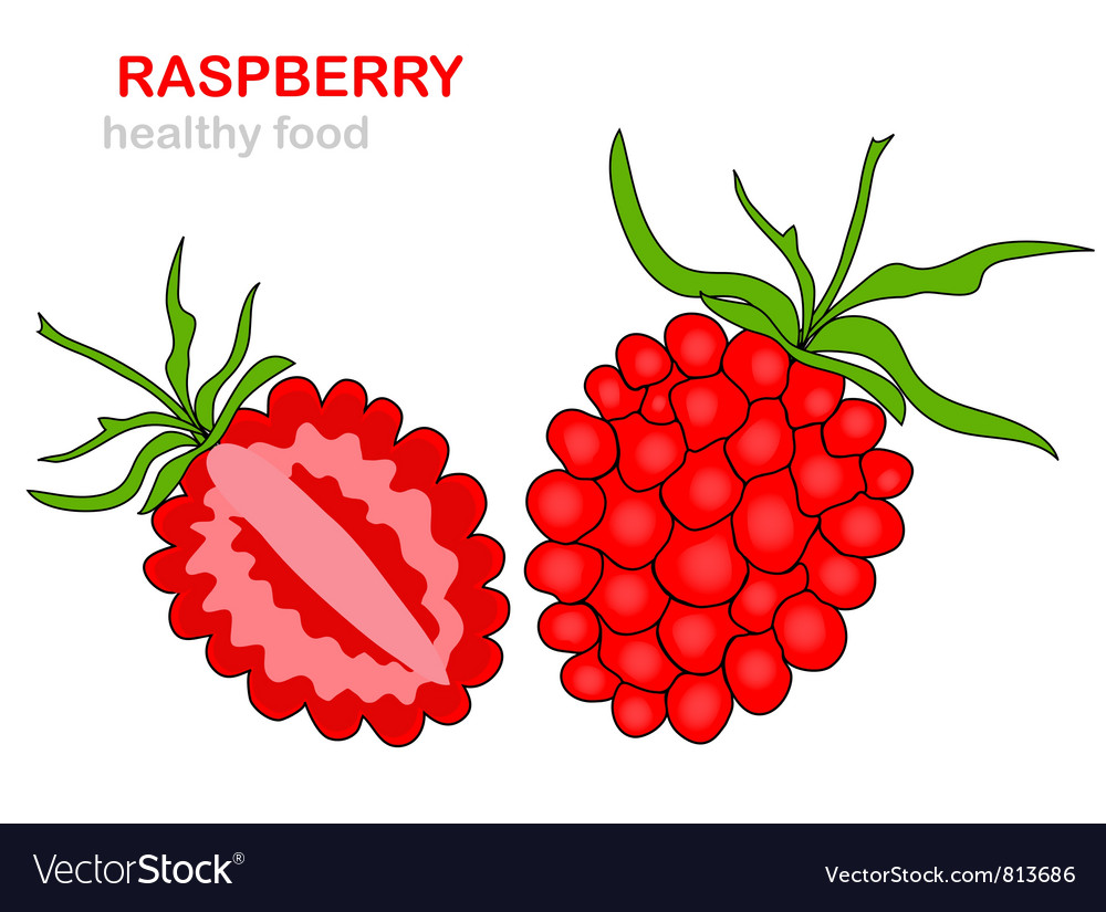 Raspberry fruit vector | Price: 1 Credit (USD $1)