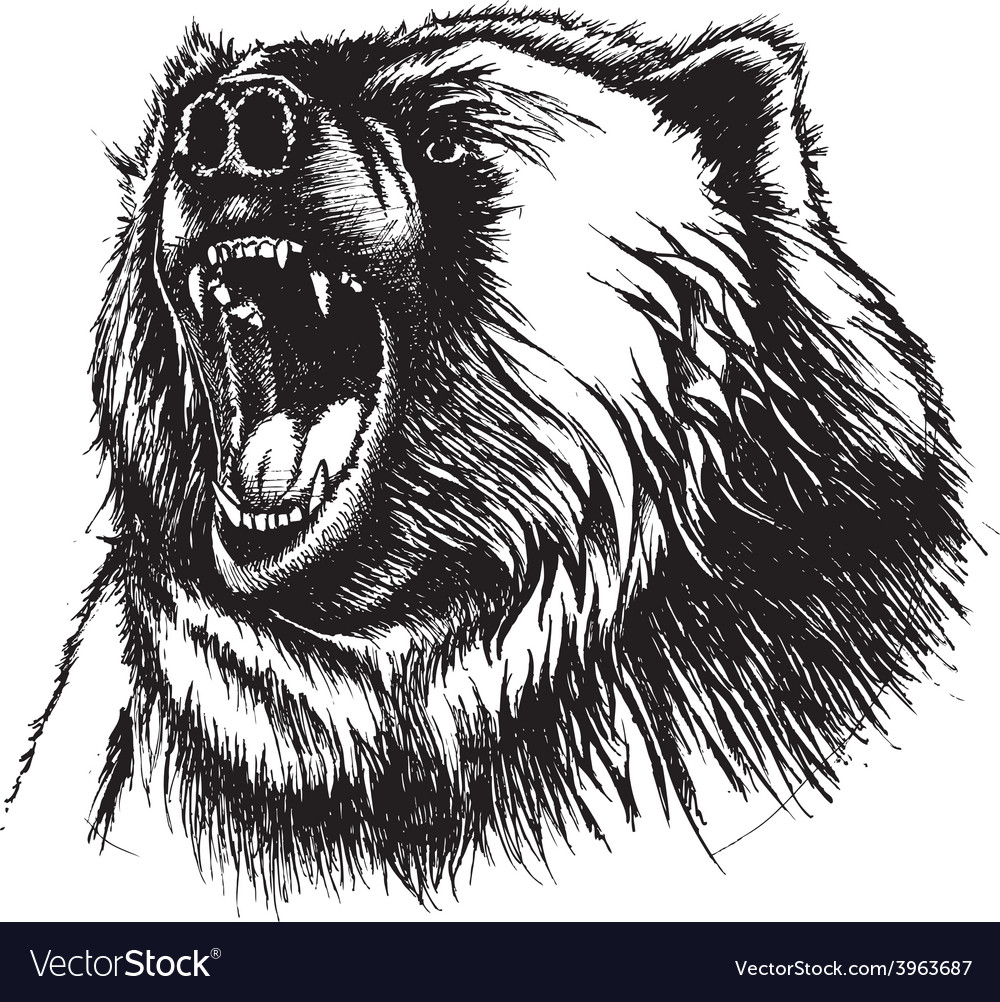 Angry bear vector | Price: 3 Credit (USD $3)