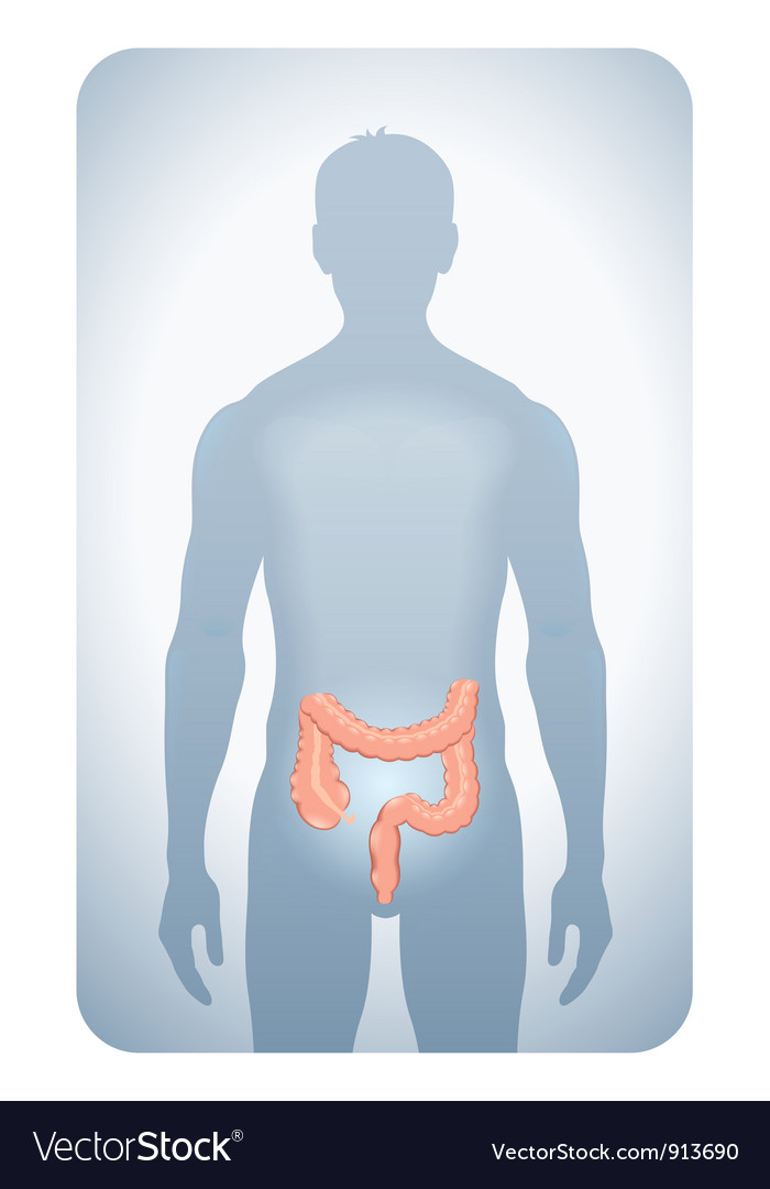 Colon highlighted vector | Price: 1 Credit (USD $1)