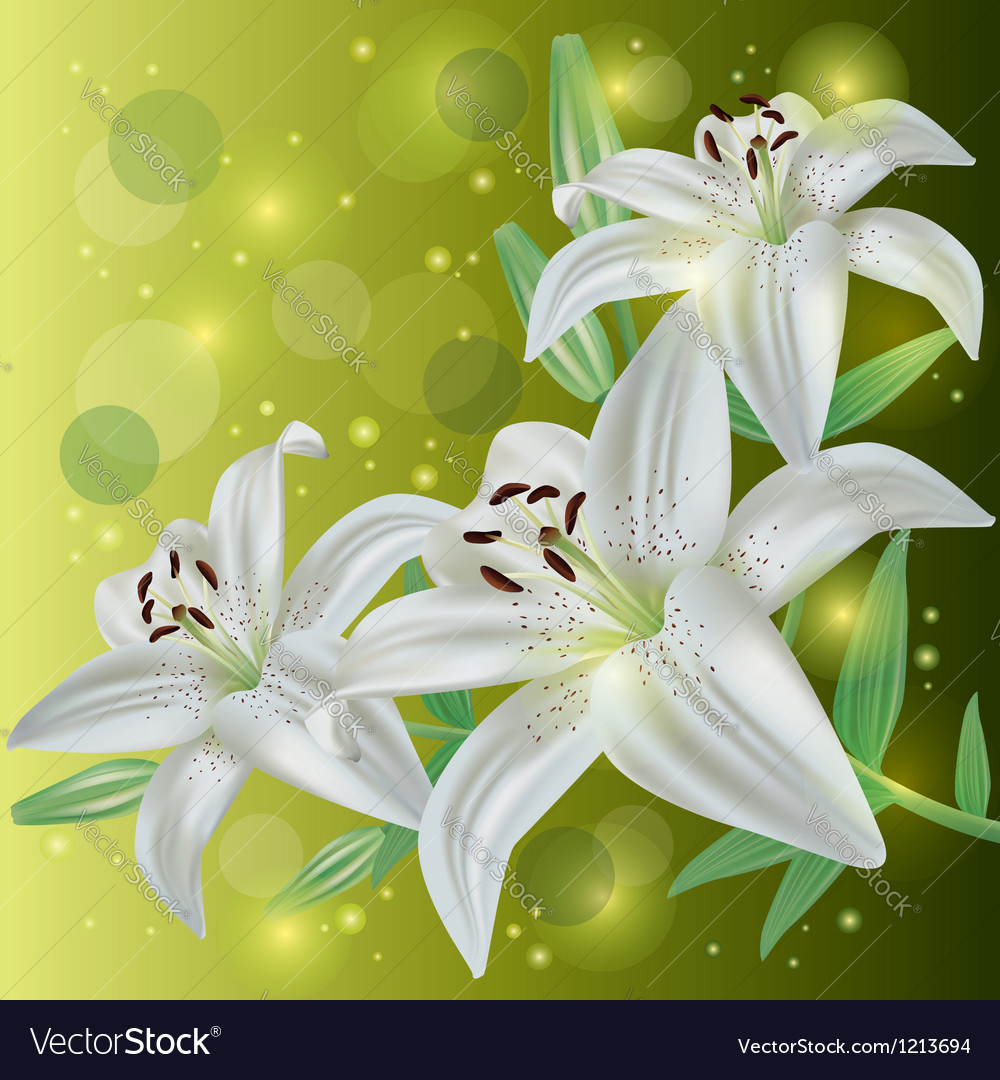 Invitation or greeting card with lily flowers vector | Price: 1 Credit (USD $1)