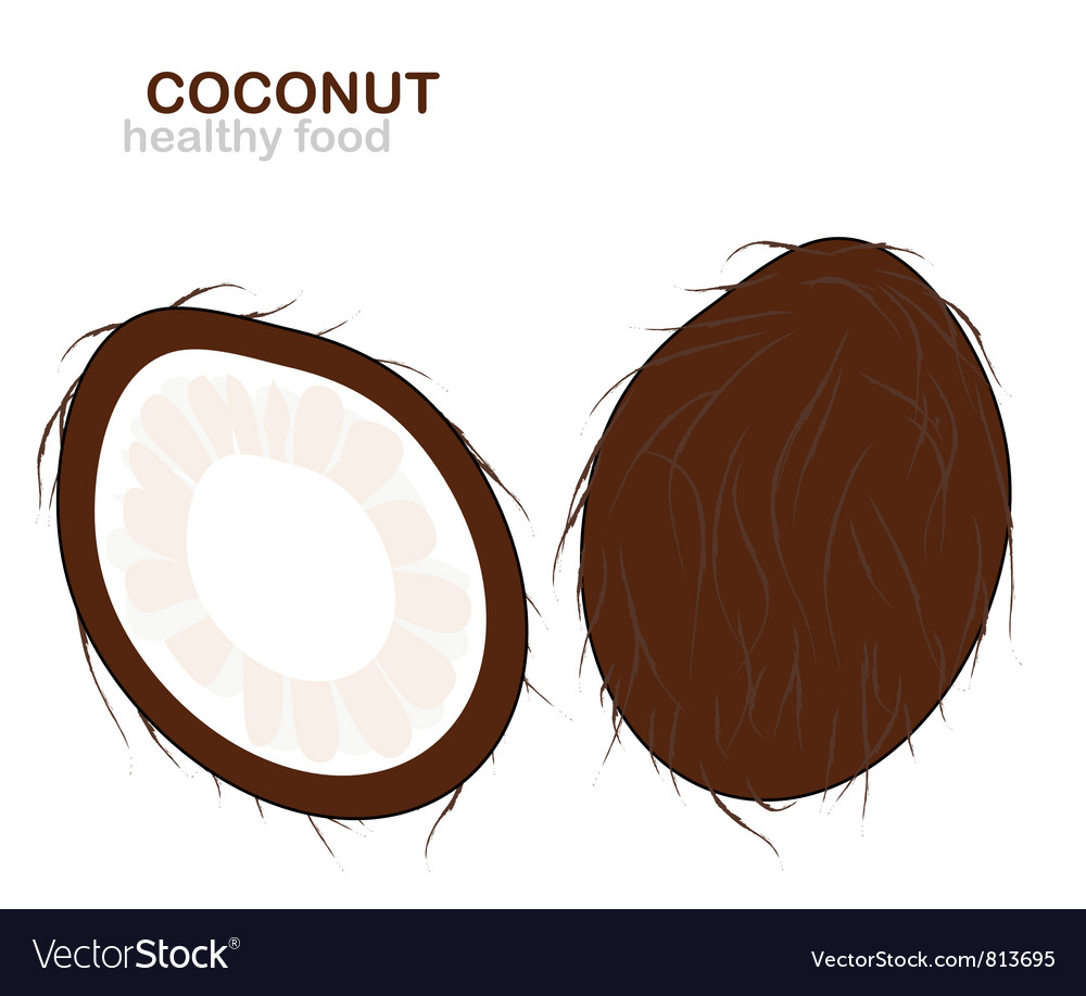 Coconut fruit vector | Price: 1 Credit (USD $1)