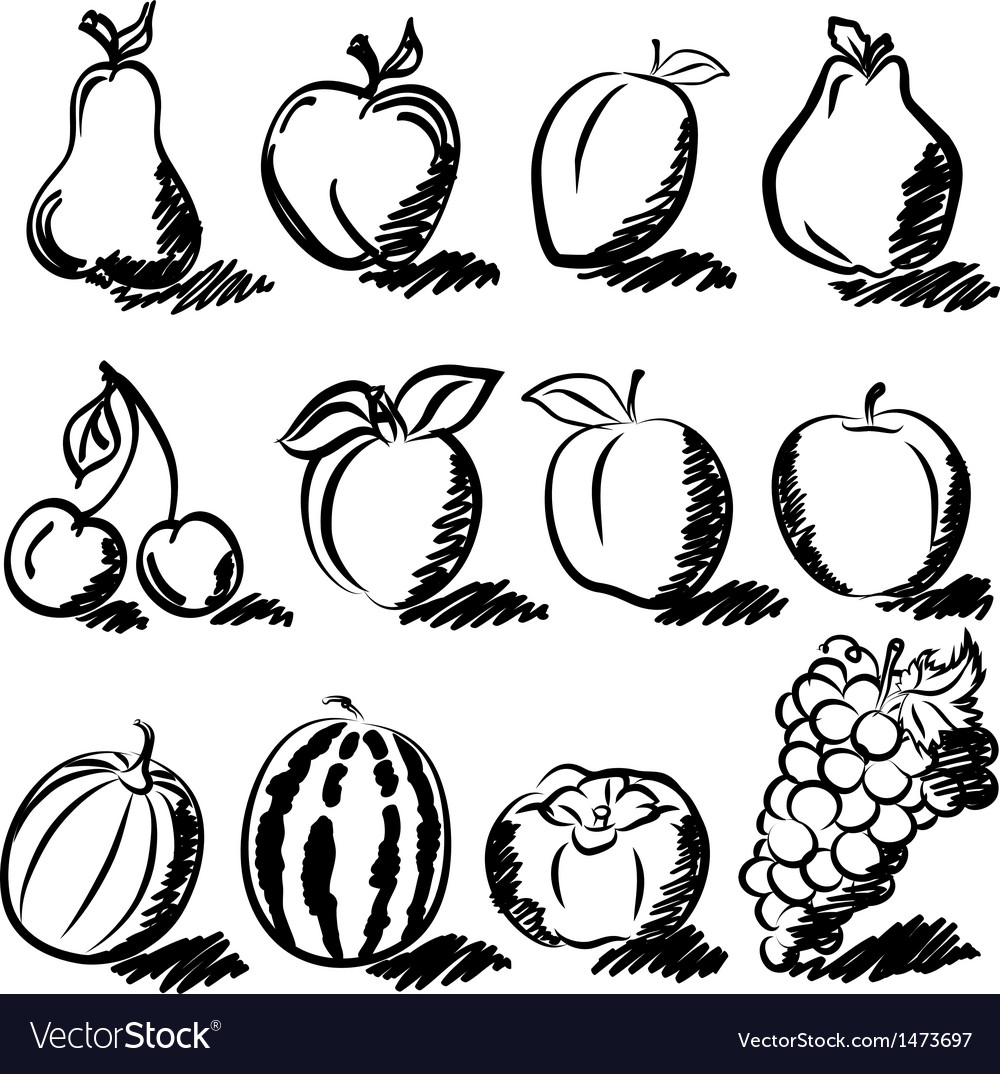 Temperate fruits sketch drawing vector | Price: 3 Credit (USD $3)