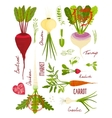 Root vegetables with greens signs and symbols vector