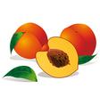 Peaches vector