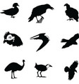 Birds of the world vector