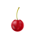 Single realistic cherry isolated on white vector