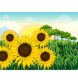 Beautiful sunflowers vector