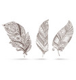 Artistically drawn stylized set of feathers vector