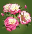 Roses - pink and yellow - vector