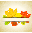 Autumn leaves on scratched paper background vector