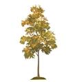 Acacia autumnal tree and grass vector