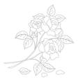 Flowers rose contour vector