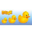 Yellow ducks vector