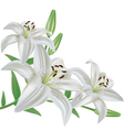 Flower lily isolated on white background vector