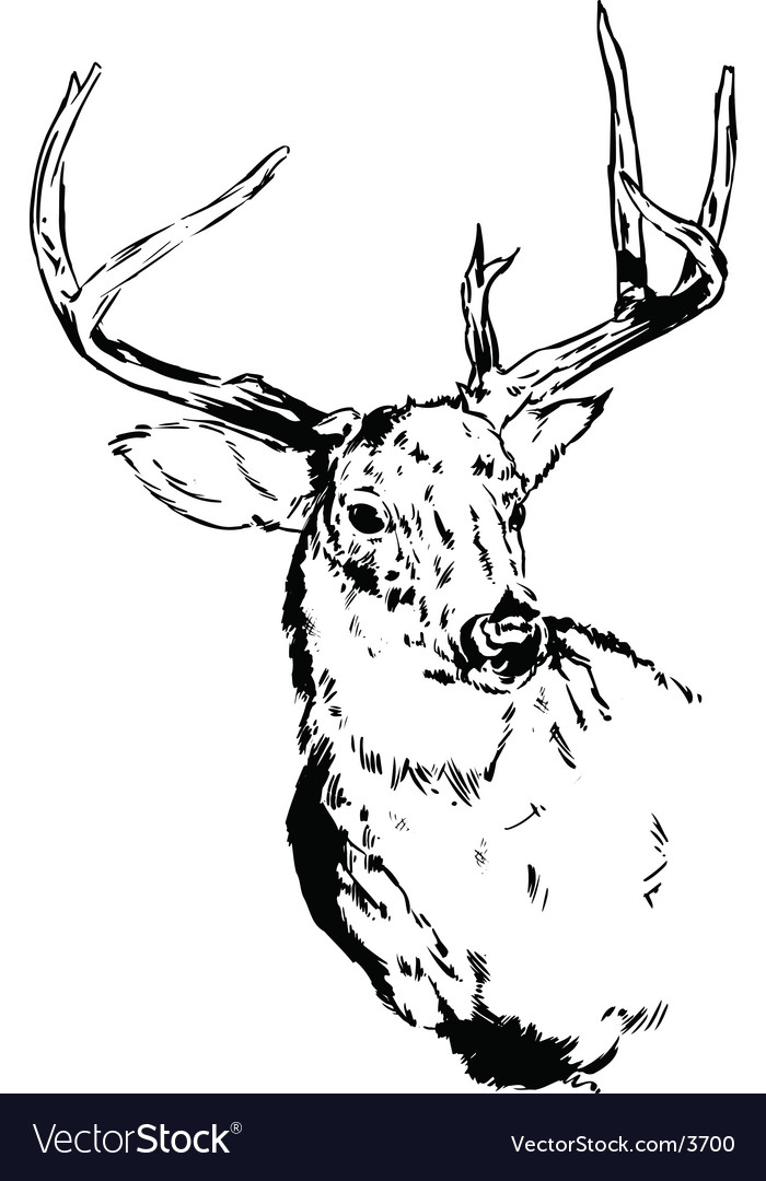 Deer illustration vector | Price: 1 Credit (USD $1)