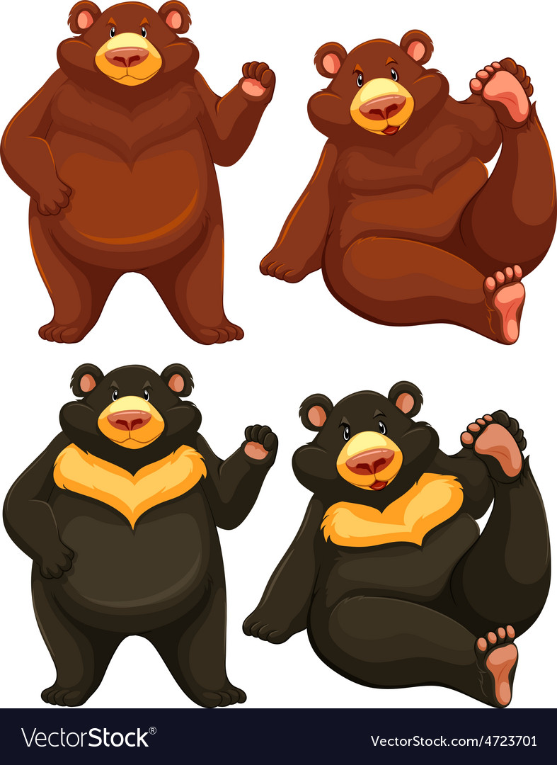 Bears vector | Price: 3 Credit (USD $3)