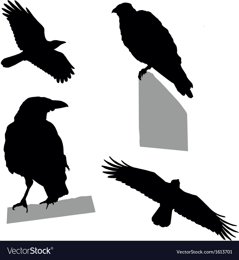 Flying sitting crow vector | Price: 1 Credit (USD $1)