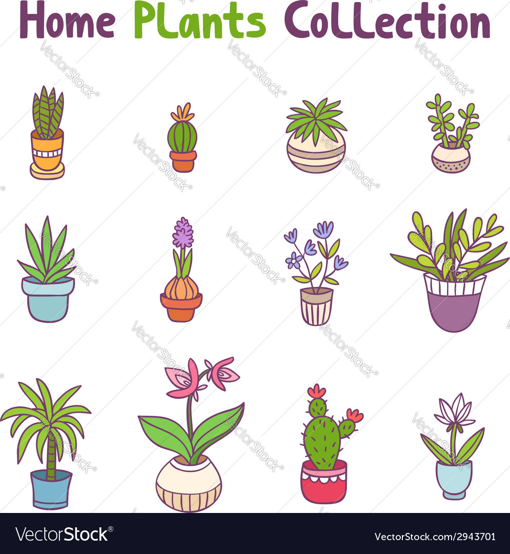 Home plants collection vector | Price: 1 Credit (USD $1)