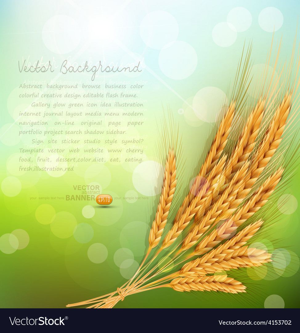 Background with gold ears of wheat and sun rays vector | Price: 3 Credit (USD $3)