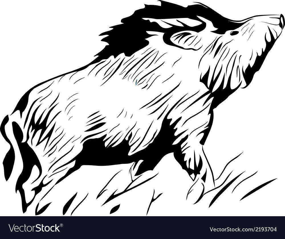 Wild pig vector | Price: 1 Credit (USD $1)