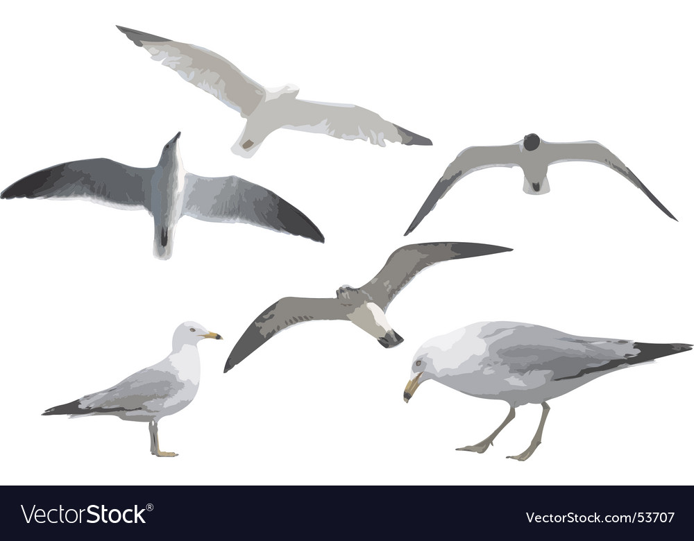 Six gulls vector | Price: 1 Credit (USD $1)