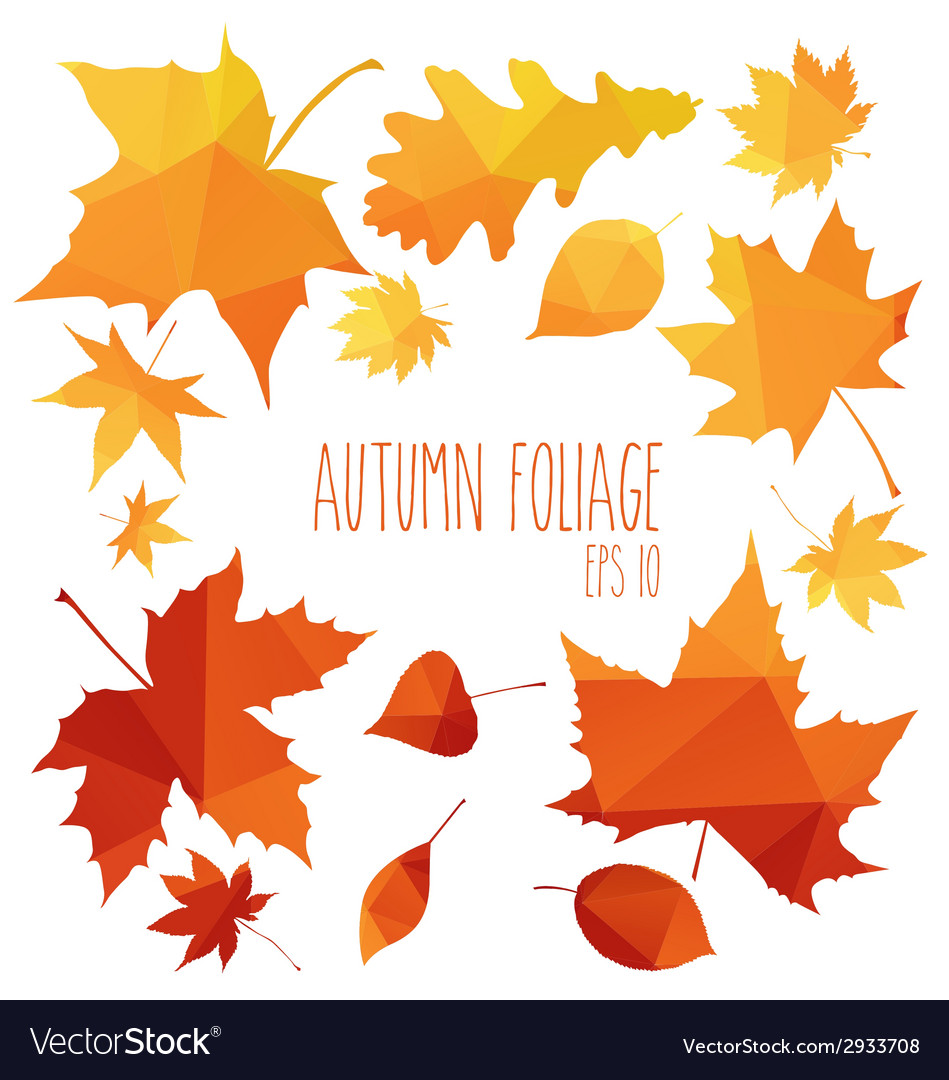 Autumn foliage vector | Price: 1 Credit (USD $1)