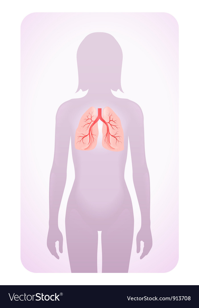 Lungs highlighted vector | Price: 1 Credit (USD $1)