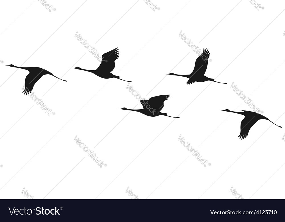 Crane flock vector | Price: 1 Credit (USD $1)