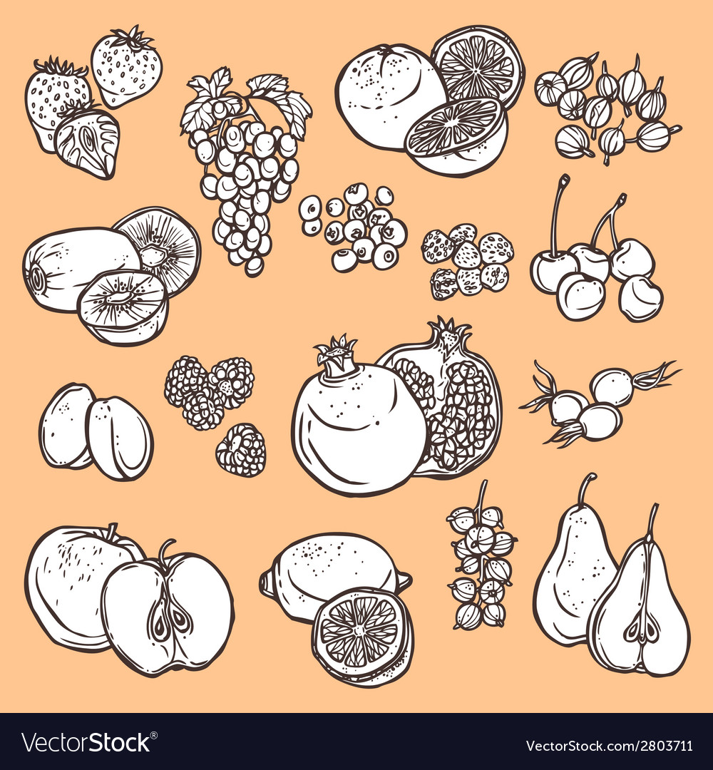 Fruits and berries sketch icons vector | Price: 1 Credit (USD $1)