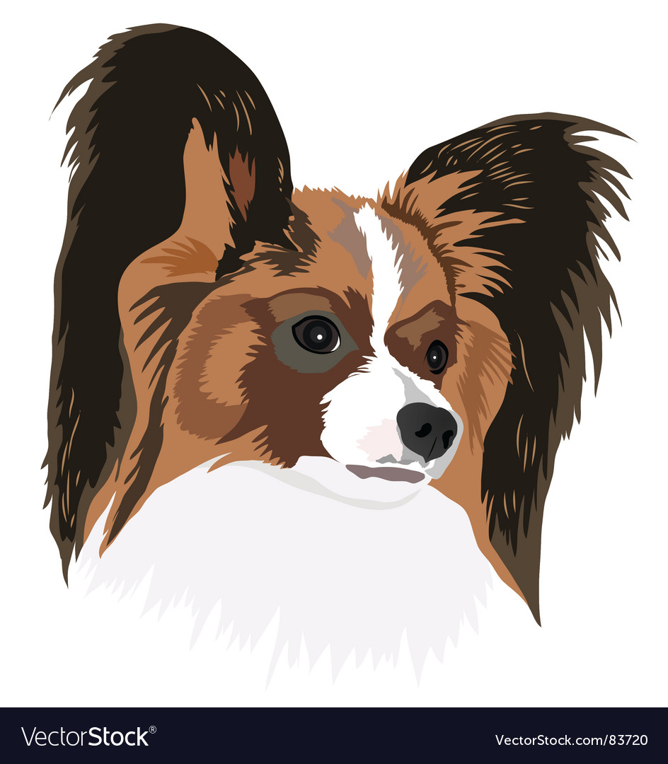 Papillon vector | Price: 1 Credit (USD $1)