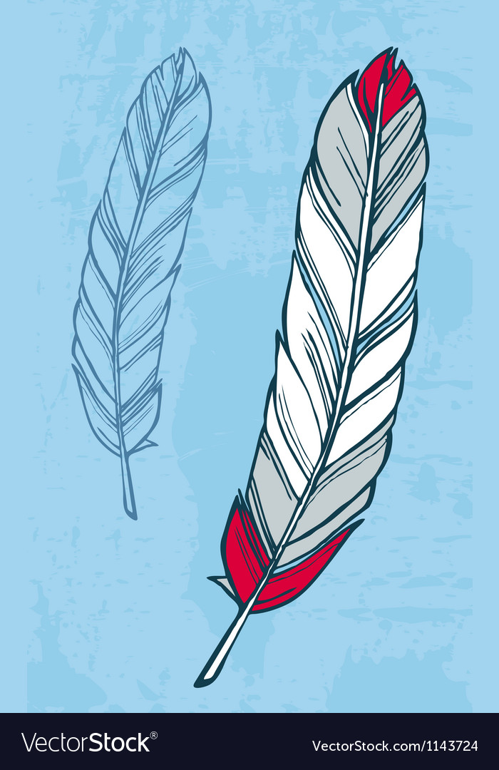 Feather vector | Price: 3 Credit (USD $3)