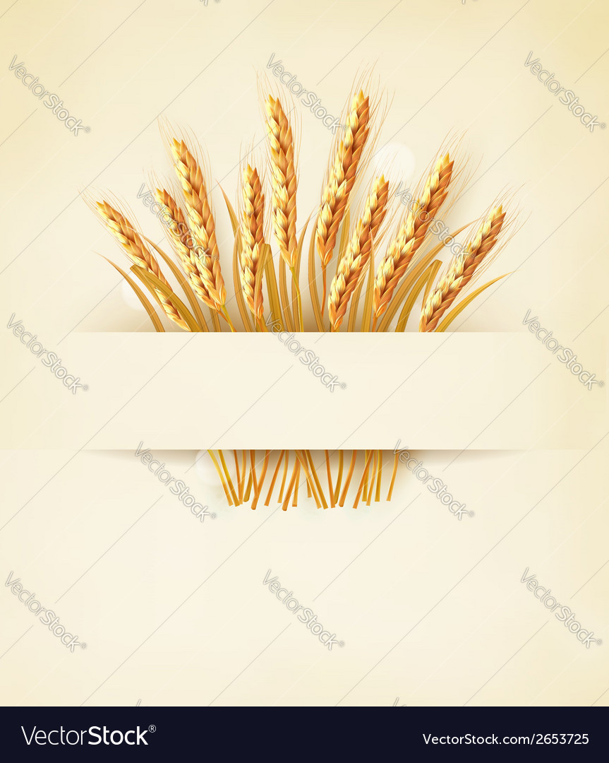 Ears of wheat on old paper background vector | Price: 1 Credit (USD $1)