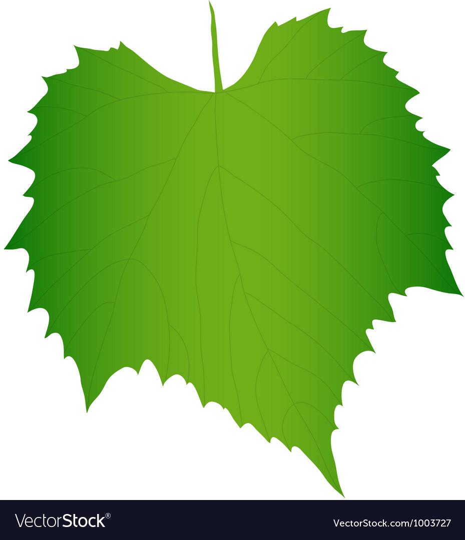 Green grape leaf vector | Price: 1 Credit (USD $1)