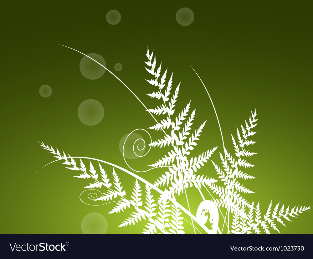 Beauty fern background vector | Price: 1 Credit (USD $1)